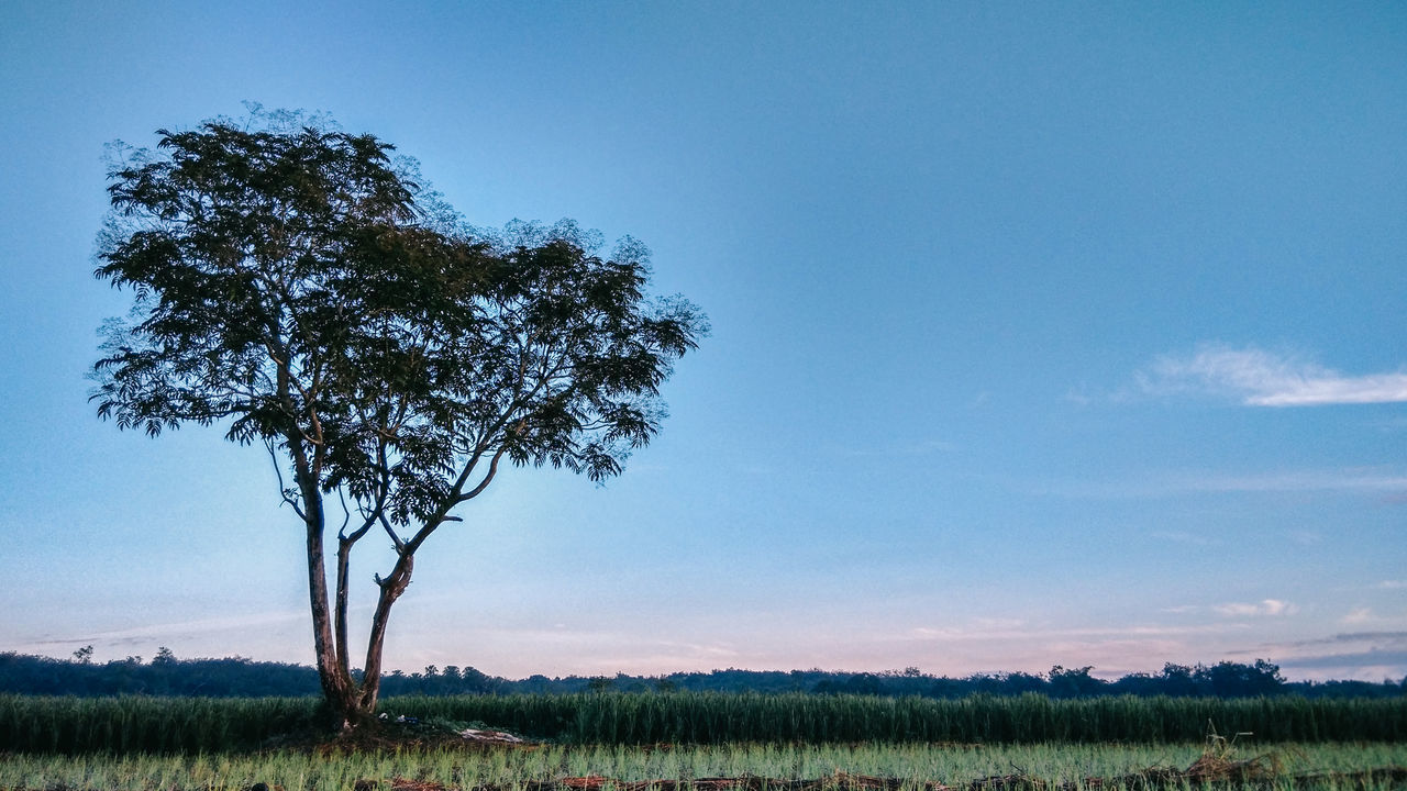 Agriculture Beauty In Nature Clear Sky Day EyeEm Best Shots EyeEmNewHere Field Grass Growth Landscape Morning Morning Sky Nature No People Outdoors Rural Scene Scenics Single Tree Sky Tranquil Scene Tranquility Tree