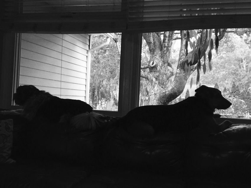 Mutts in silhouette! Dogs Waiting