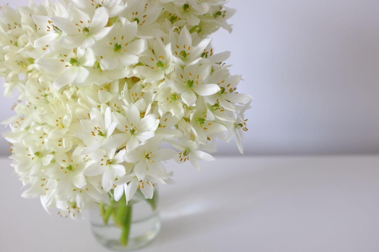 Beautiful stock photos of white, Beauty In Nature, Close-Up, Copy Space, Flower