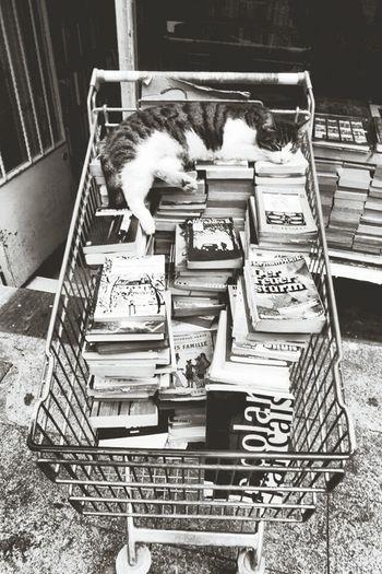 Cat Kedicik Kitapkokusu Kitaplar Blackandwhrite Canon Sokaktahayatvar Sokakhayvanlari Citylife Books Eyemphotography EyeEm Old City Street Follow