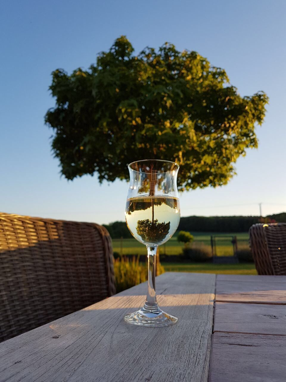 alcohol, table, drink, food and drink, tree, outdoors, refreshment, drinking glass, wine, no people, clear sky, wineglass, day, building exterior, freshness, sky, close-up, architecture, nature