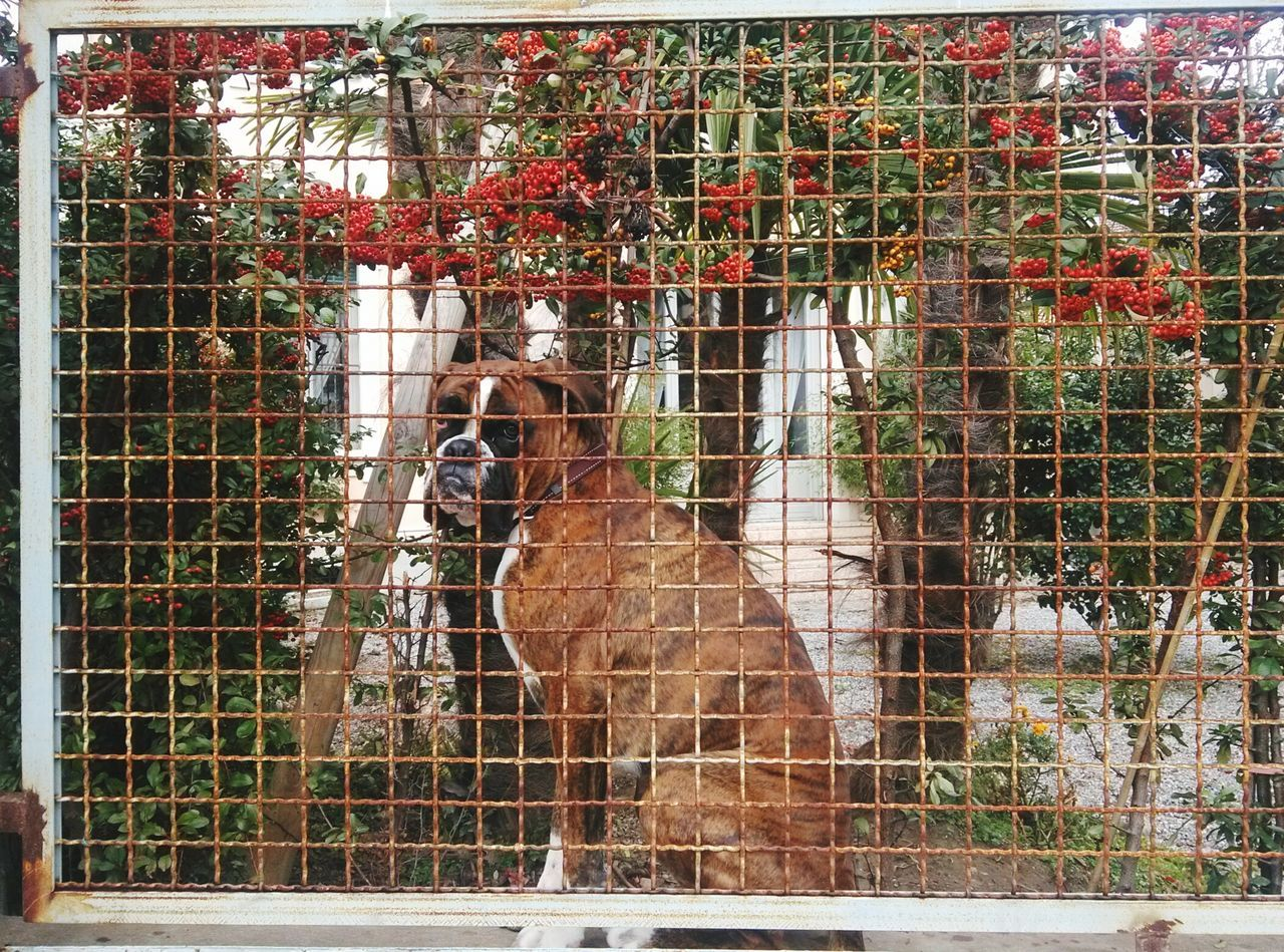 Metal Cage Metal Full Frame No People Trapped Day Outdoors Security Bar Close-up Dog