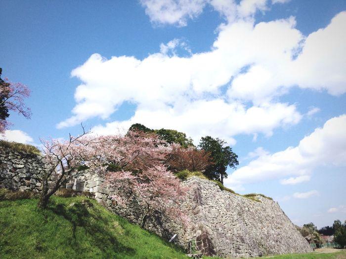 Japanese Castle