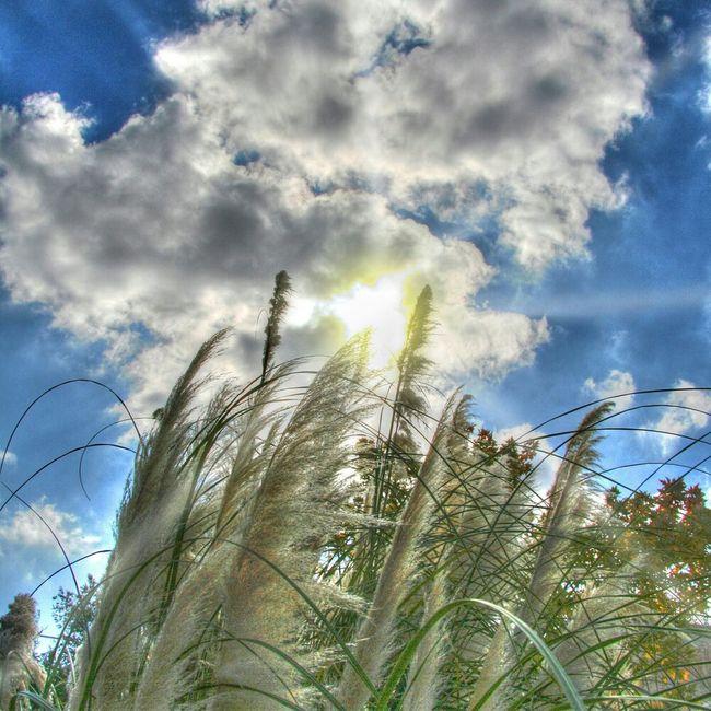 Clouds Sun Sky Landscape Italy Colors Blue Panorama Italia Plants Cielo Nuvole Colori Piante