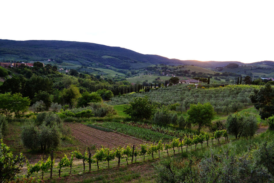 Countryside Day Exploring Exploring Tuscany Grapes Green Green Color Hill Holiday Landscape Mountain Range Nature Non-urban Scene Scenics Sunlight Sunset Tranquil Scene The Great Outdoors - 2016 EyeEm AwardsTree Trip Tuscany Tuscany Countryside Landscapes With WhiteWallValley Greetings From Italy