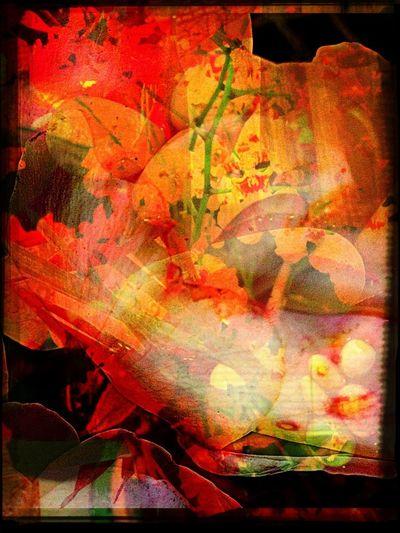 Burning Petals Flowers Abstractions In Colors Digitalart  Contemporaryart