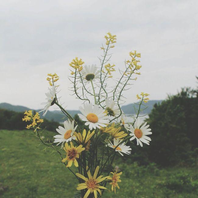 Flowers Beautiful ♥ Love ♥ Dazy