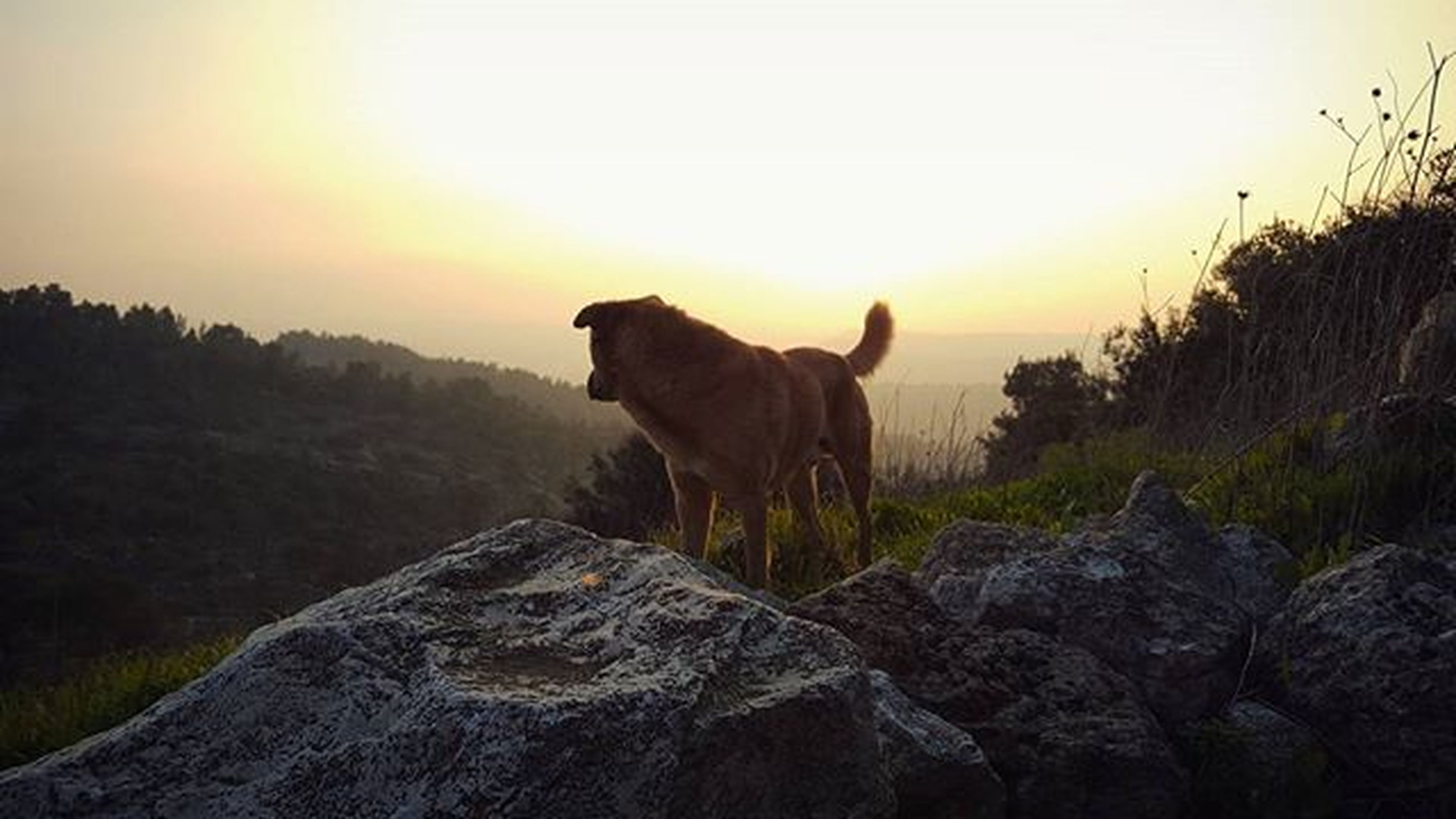"I call this ""Dog with View"" Ojdog Mountain Sunset View Israel Moshavbeitmeir Dog S6 Hashtags"