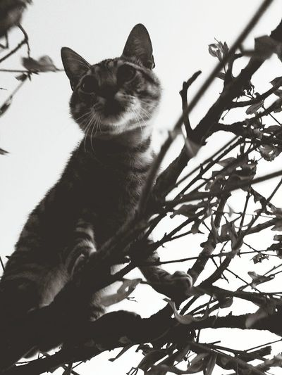 Animal Themes One Animal Domestic Animals Pets Cats Of EyeEm Blackandwhite