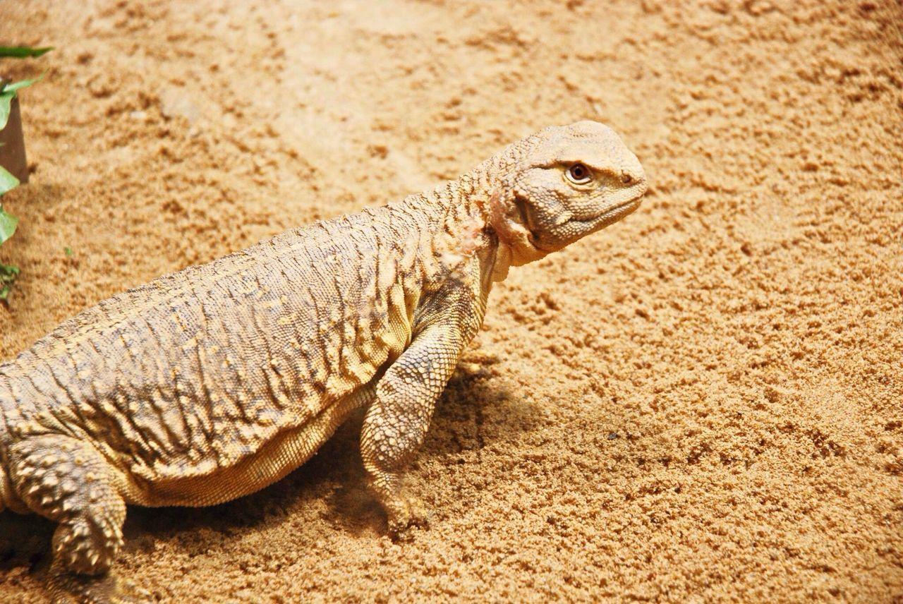 Animals Zoo Lizzard Lizard Check This Out