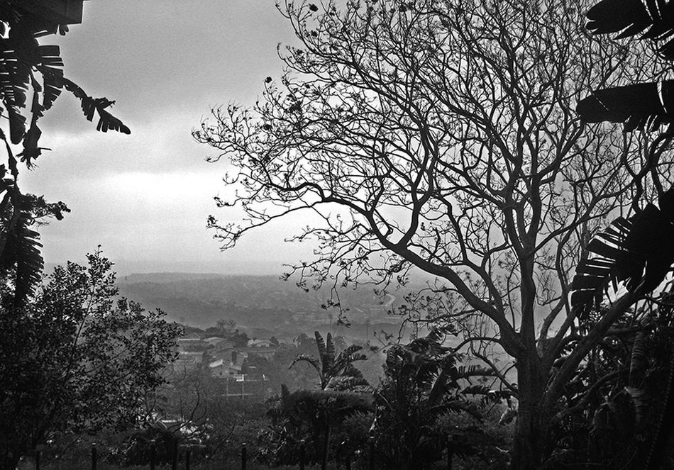 Tree View The Spot