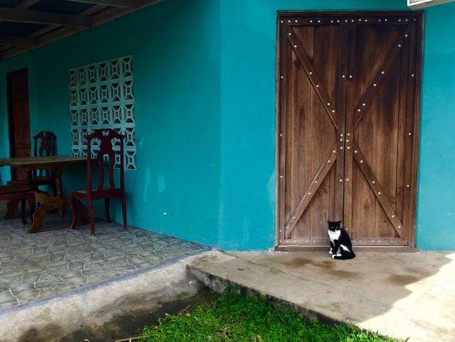Blue Cat Costa Rica