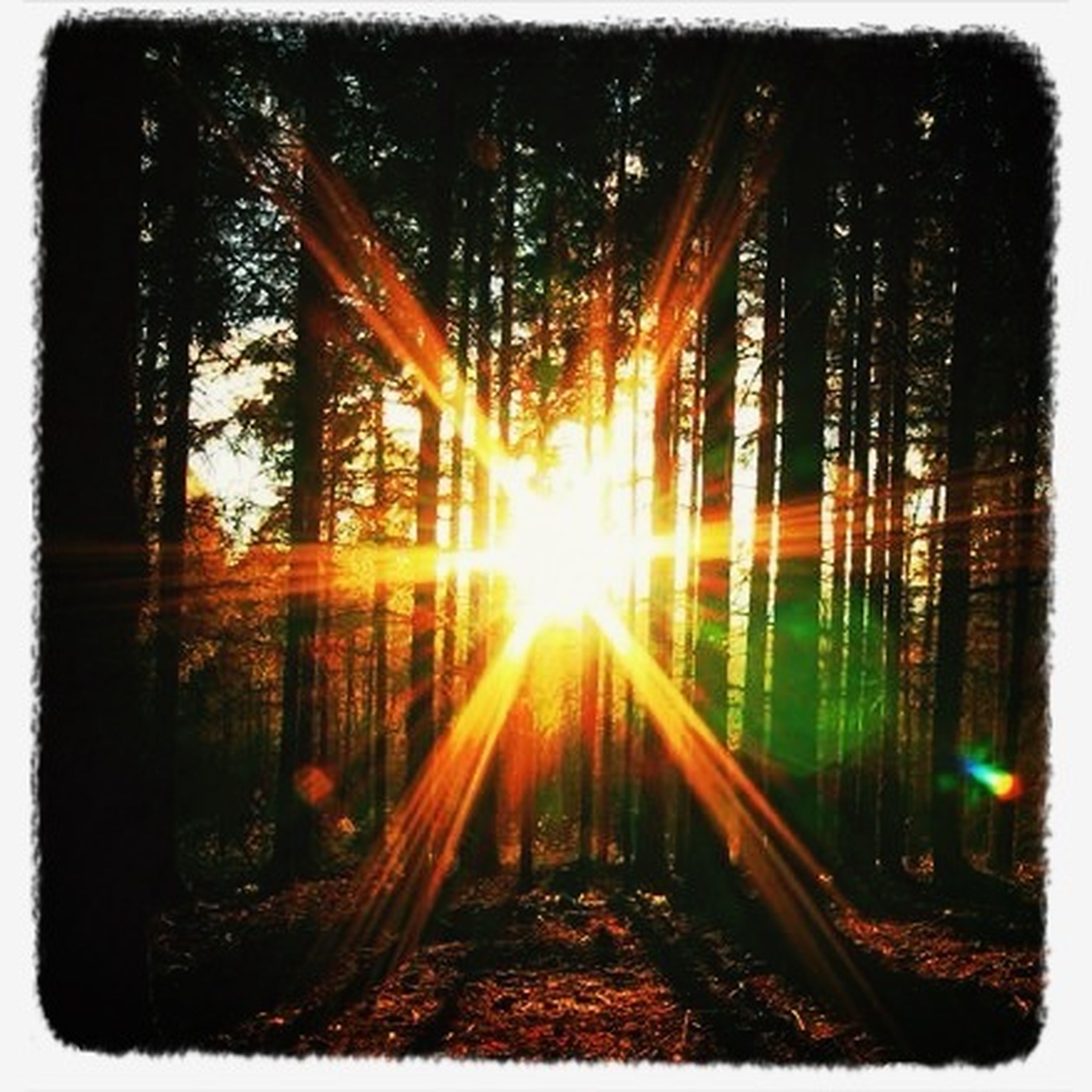 tree, transfer print, sun, sunbeam, lens flare, auto post production filter, sunlight, tranquility, nature, sunset, tranquil scene, forest, scenics, beauty in nature, growth, sky, outdoors, back lit, tree trunk, no people