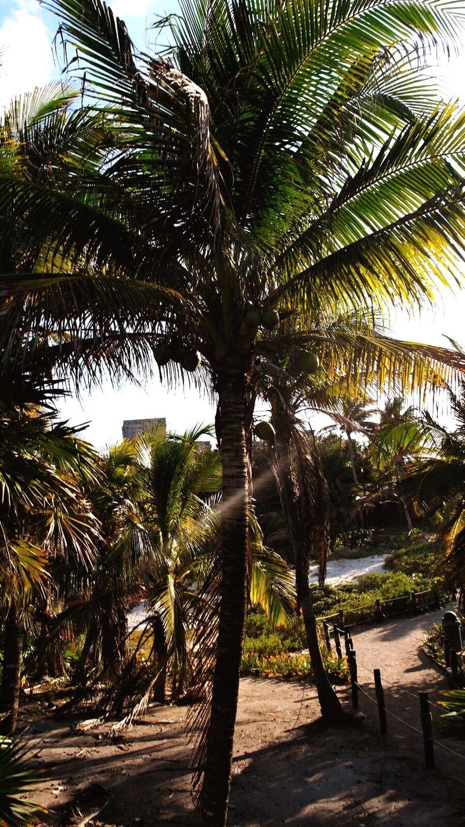 Palm Tree Tulum , Rivera Maya. First Eyeem Photo