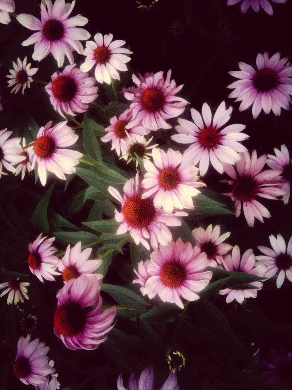 Pink flowers blooming in field