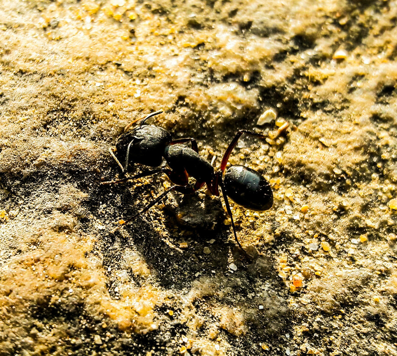 Ant Ant Ants Big Ant Black Ant Macro Beauty Macro Macro_collection Macro Photography Samsung J7 Photography Mobilephotography Mobile Photography EyeEm Best Shots EyeEm Nature Lover Eye4photography  EyeEm Gallery EyeEm Best Edits EyeEm Best Shots - Nature