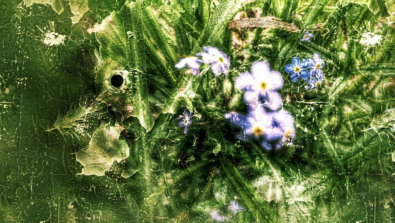 Grunge It Up Hdr Edit Forgetmenots Nature