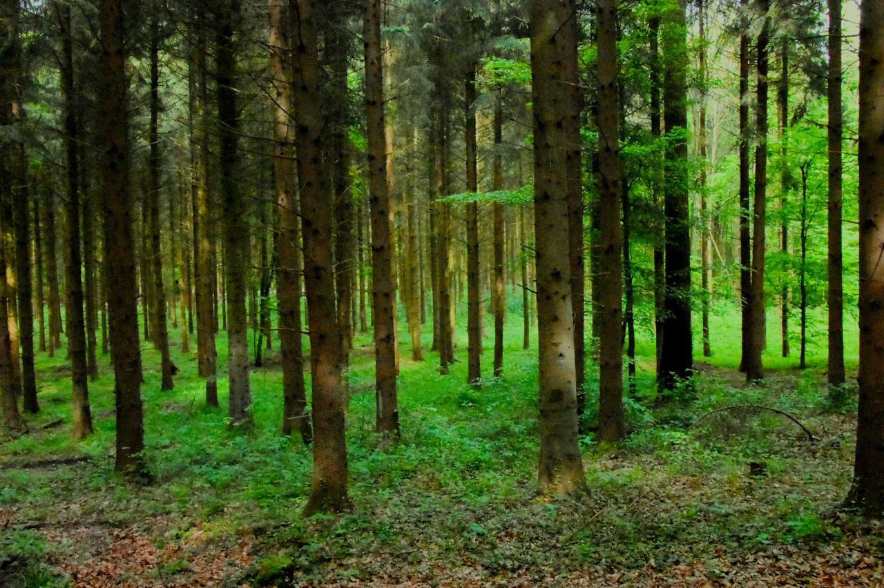 Abundance Beauty In Nature Commercial Photography Day Forest Grass Green Color Growth Landscape Lush - Description Nature No People Non-urban Scene Outdoors Scenics Tranquil Scene Tranquility Tree Tree Trunk WoodLand Woods