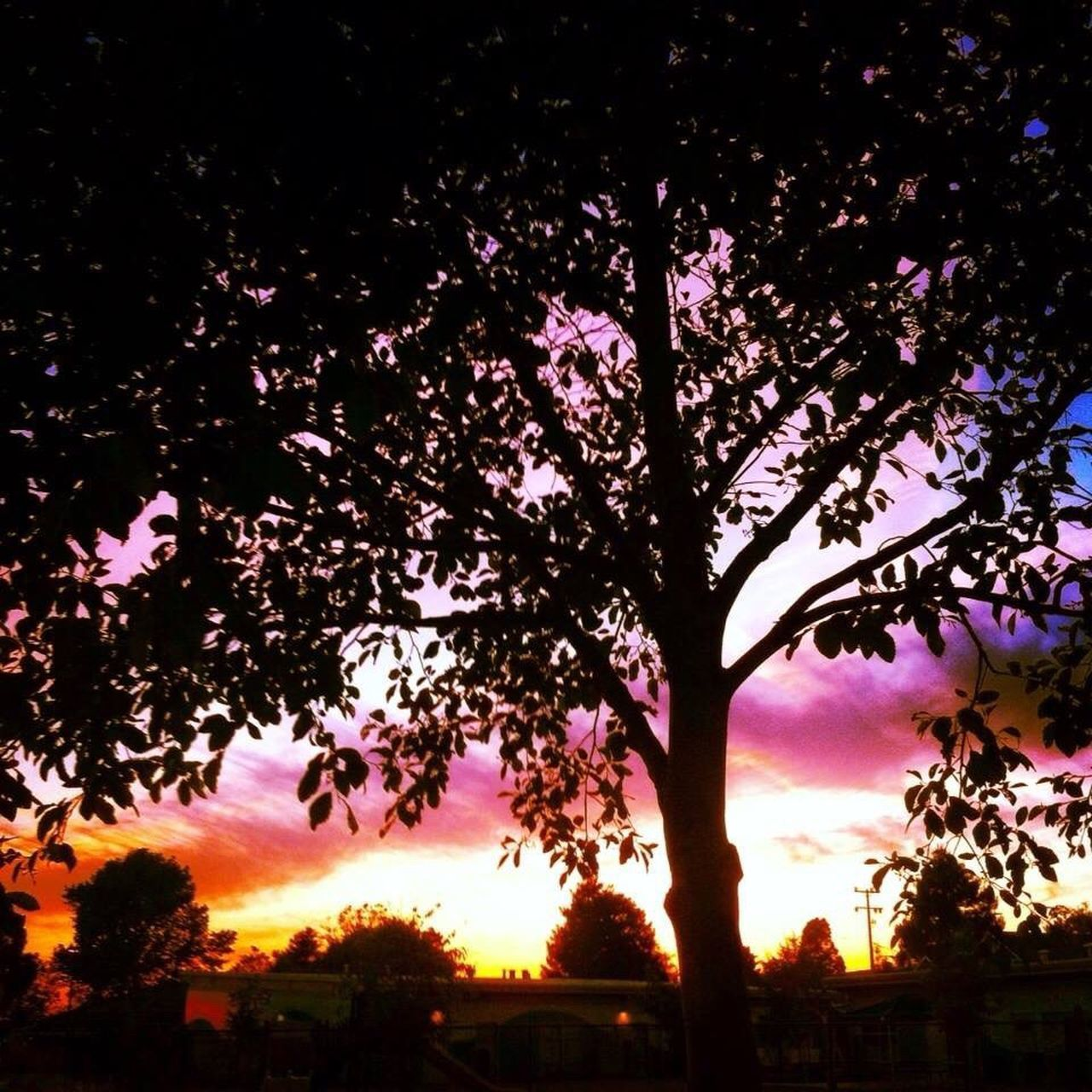 tree, nature, silhouette, growth, beauty in nature, no people, sunset, outdoors, sky, scenics, branch, low angle view, flower, freshness, day