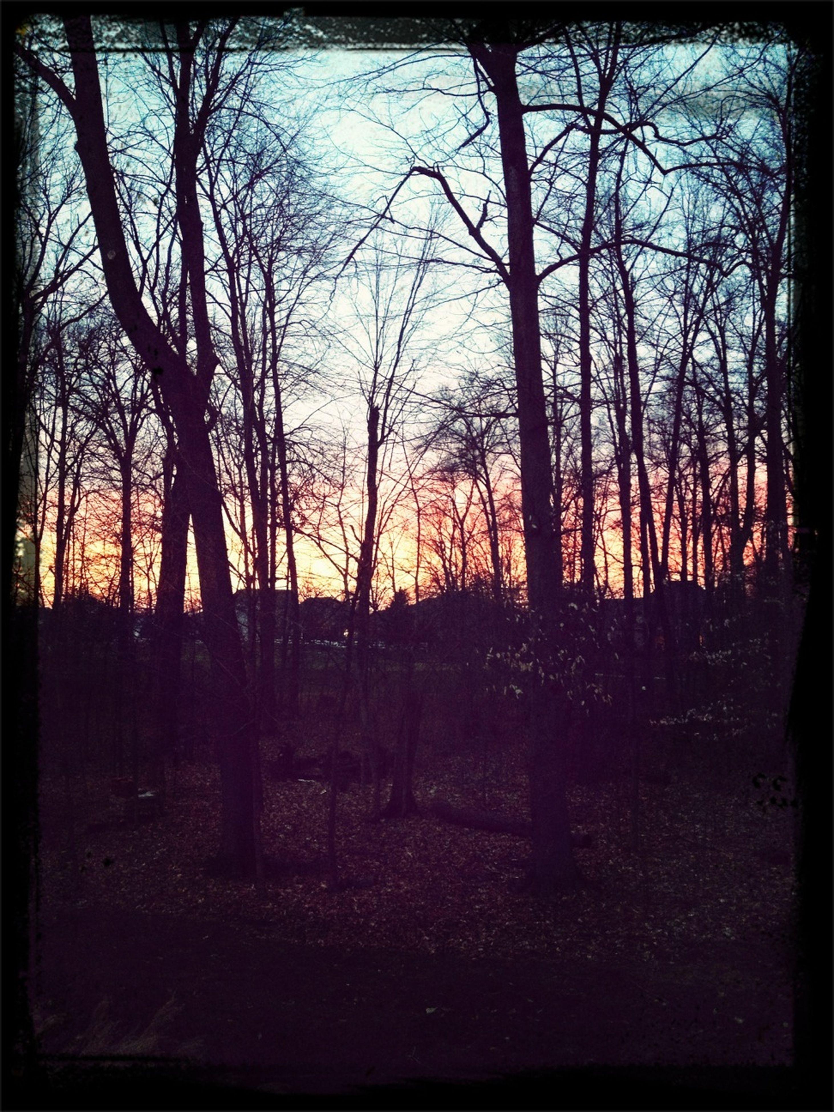 transfer print, auto post production filter, sunset, tree, silhouette, bare tree, tranquility, tranquil scene, scenics, beauty in nature, nature, sky, branch, sun, landscape, orange color, sunlight, clear sky, idyllic, non-urban scene