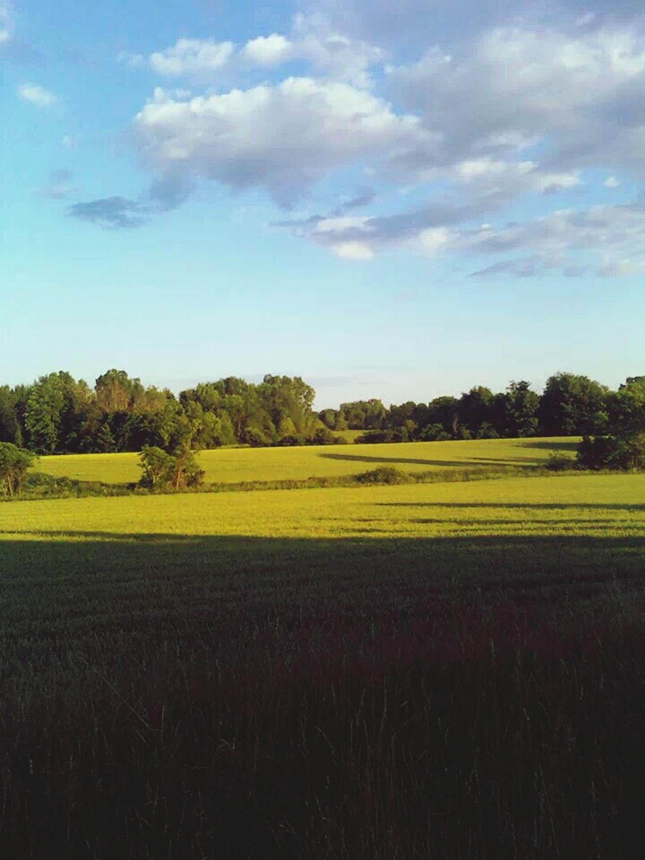 Field My Back Yard Beautiful
