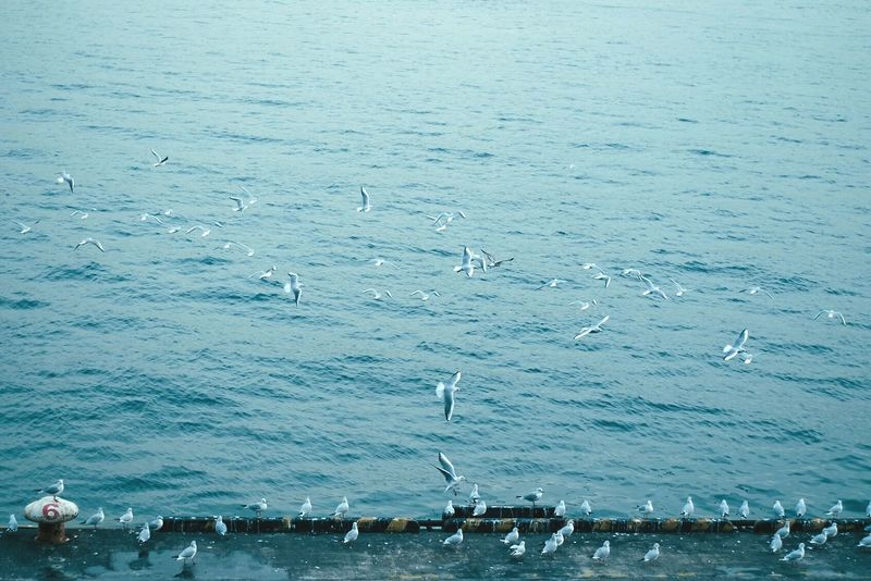 fly. Sea Water Nature Blue Outdoors Day Animal Themes Scenics Beauty In Nature Large Group Of Animals No People Bird Birds Fly EyeEm Best Shots EyeEm Nature Lover EyeEmJapan