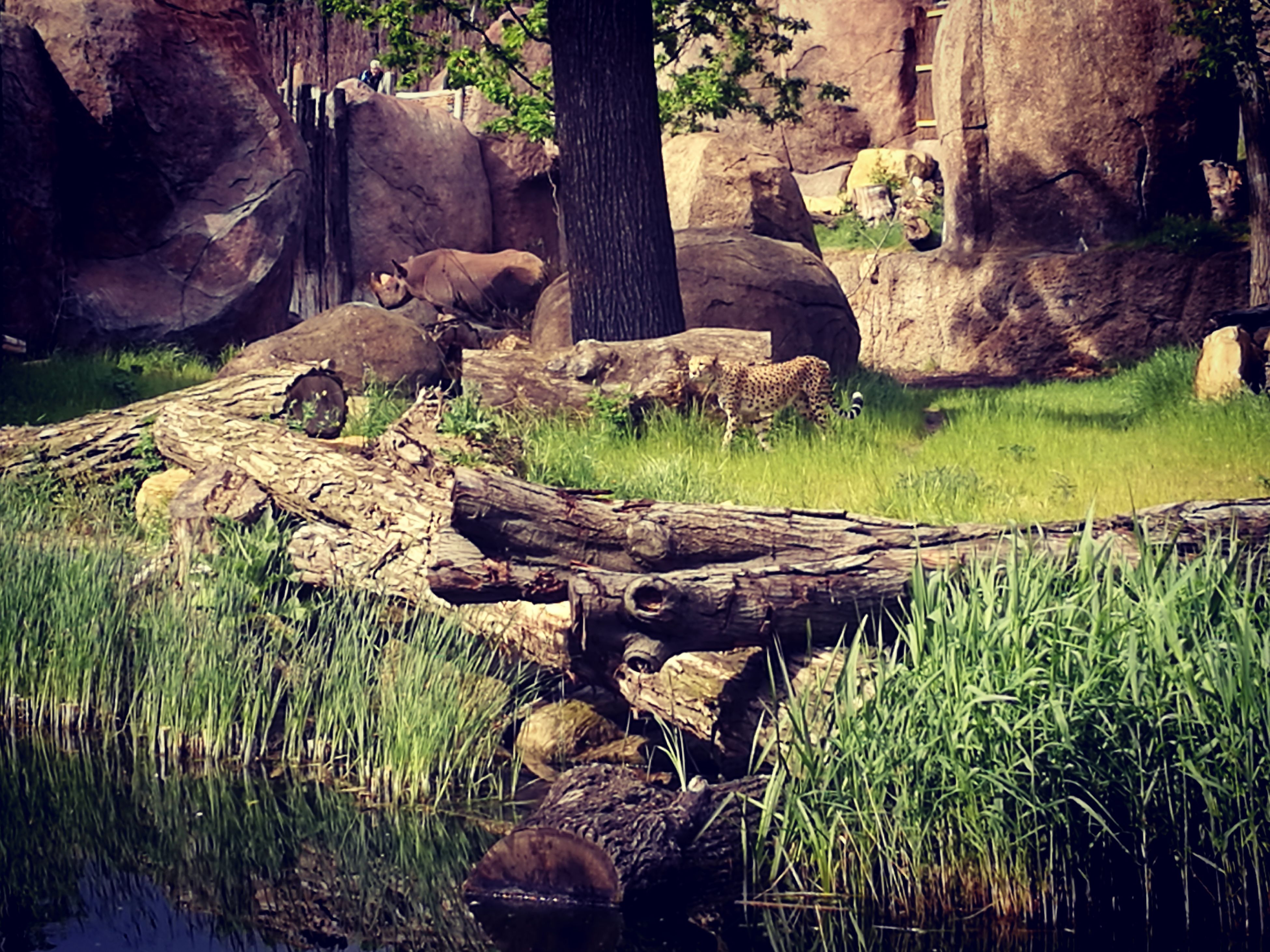 grass, plant, growth, nature, tranquility, rock - object, tree, green color, tree trunk, forest, beauty in nature, tranquil scene, stream, moss, day, rock formation, scenics, landscape, outdoors, sunlight