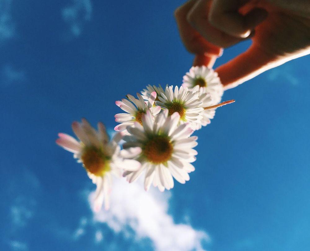 It finally looks like summer Daisy Chain Flowers Sunshine Blue Sky Sundays Sunday Afternoon Summer Views Flowerporn Blue Sky And Flowers Blowing In The Wind... Colour Of Life Festival Season Eyeemphoto TakeoverContrast