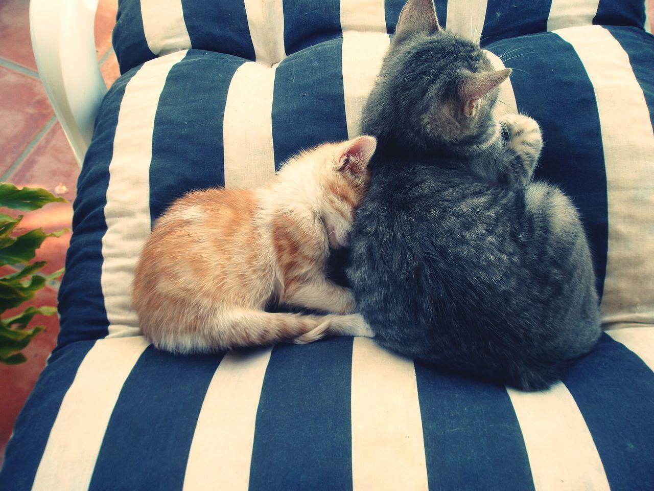 Gatos Gatos 😍 Cat Cats Catstar #cat #catnap #catoftheday #catpic #catlovers #catsconnect #catinstagram #catsofinstagram #gato #gatinhos #gatto #garfield #petstagram #premierpet #photooftheday #petsofinstagram #picoftheday #petlovers #instabicho #ilovecats #ilovemypet #issovici Cats 🐱 Tumbona Hondon De Los Frailes