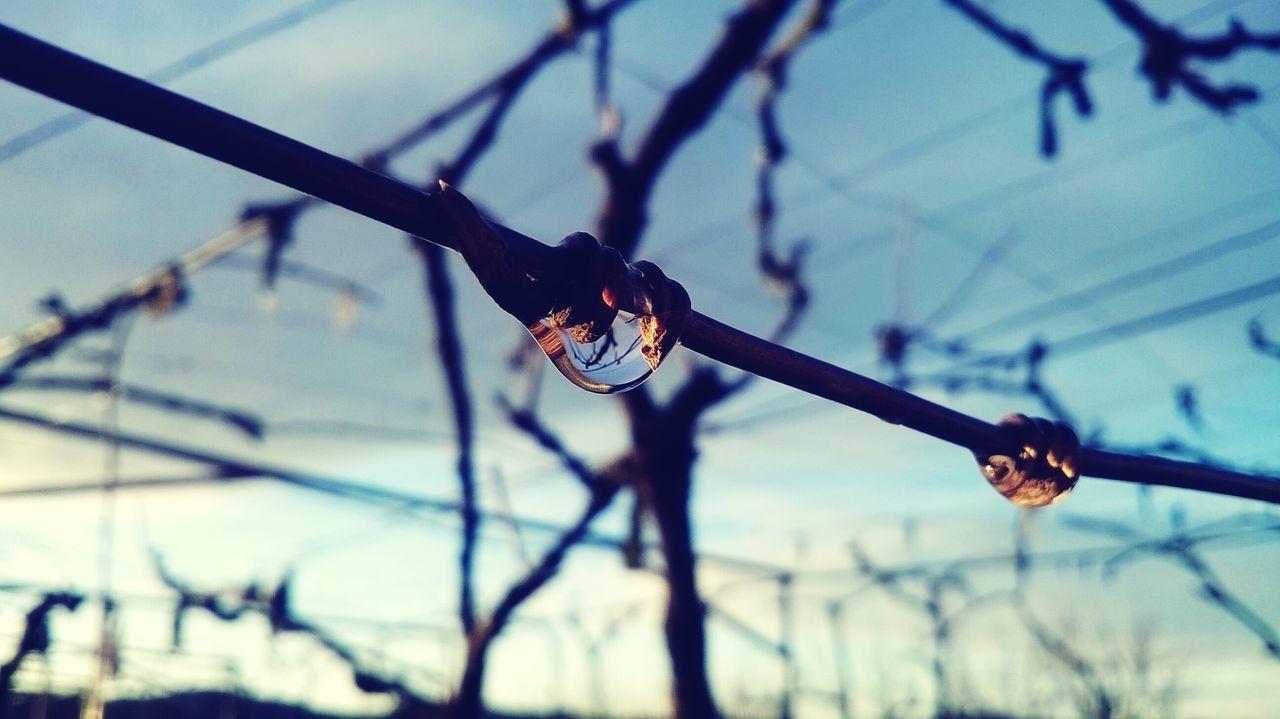 Water Drop Metal Wire Sunset After The Rain Autumn Colors Open Edit EyeEm Best Shots My Best Photo 2015