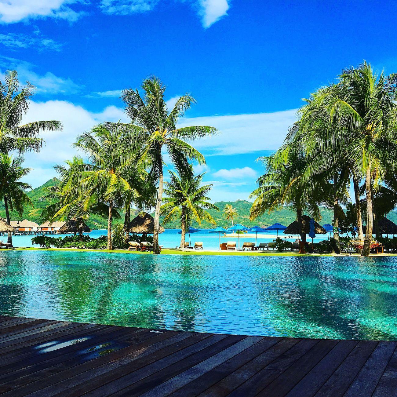 Palm Tree Water Sea Tranquil Scene Beach Beauty In Nature Vacations Sky Outdoors Swimming Pool Bora Bora