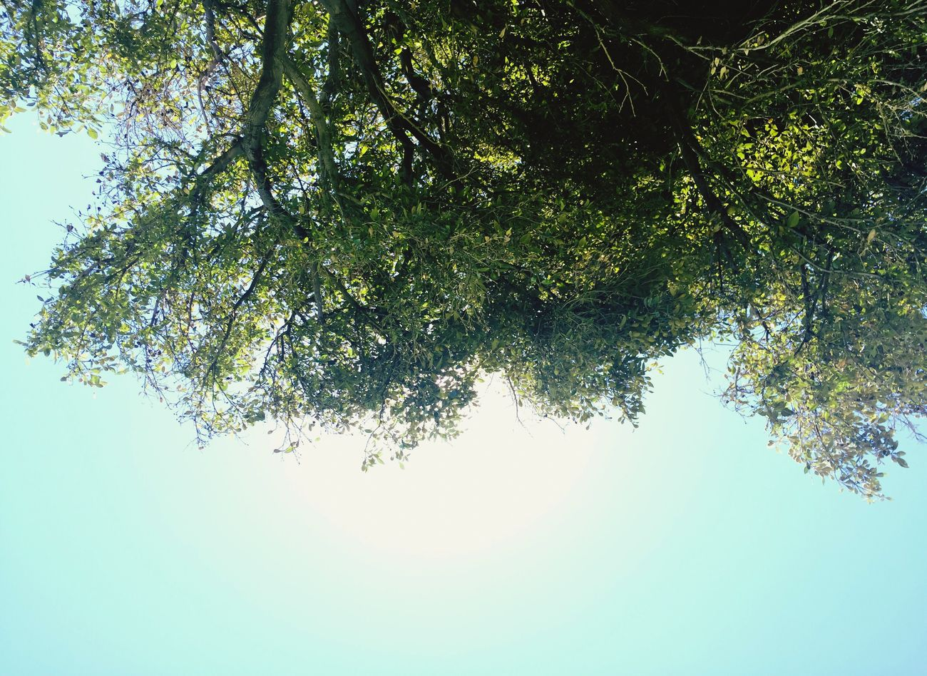 Lookingup Myview Lookabove Tree Above Facing The Sky Tree Branches Tree Branch Against The Sky Nature Outdoors EyeEmNewHere Beach Park Nature Greenery EyeEmNewHere