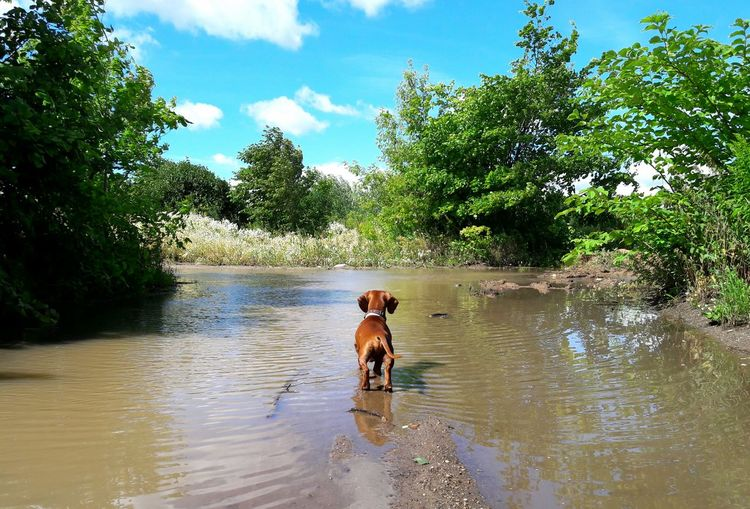 Hello World Hi! Helo World Smartphone One Animal Dog Samsung J7 Photography Samsung J7