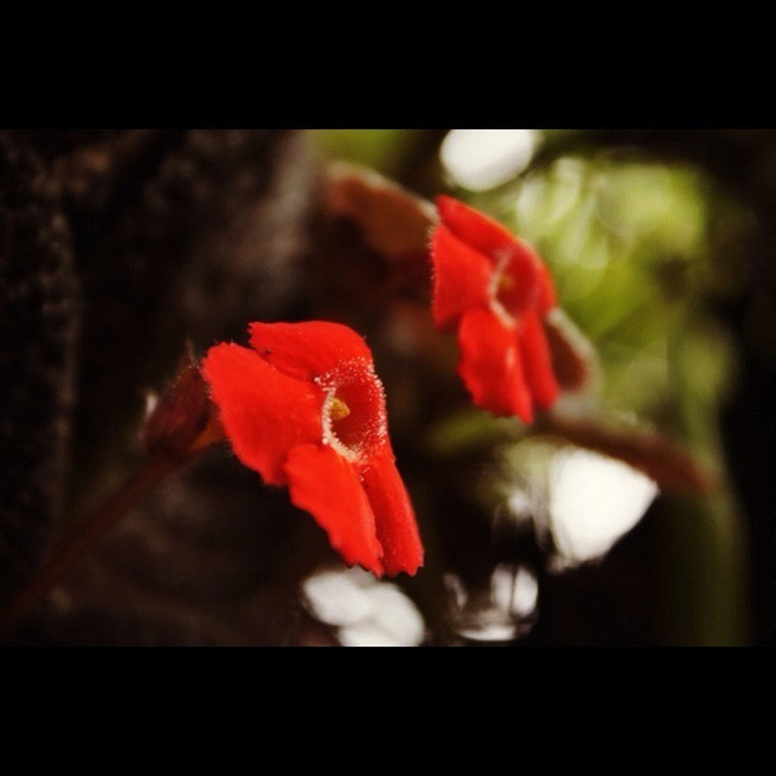 red, flower, petal, focus on foreground, fragility, close-up, transfer print, flower head, freshness, growth, plant, beauty in nature, auto post production filter, selective focus, nature, blooming, single flower, stem, orange color, day