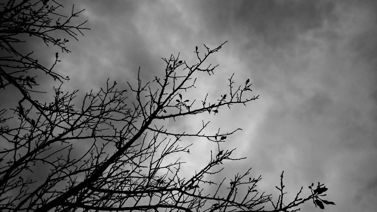 Tree Tree Branches Cloud - Sky Low Angle View No People Storm Cloud Monochrome Photography Rainy Days Taking Photos Photography Feeling Creative EyeEm Best Shots Light And Shadow Monochromatic Black And White Outdoors Rainy Gray Sky Feeling Blue The Great Outdoors Open Edits Gloomy Weather Gloomy Sky Gray Black