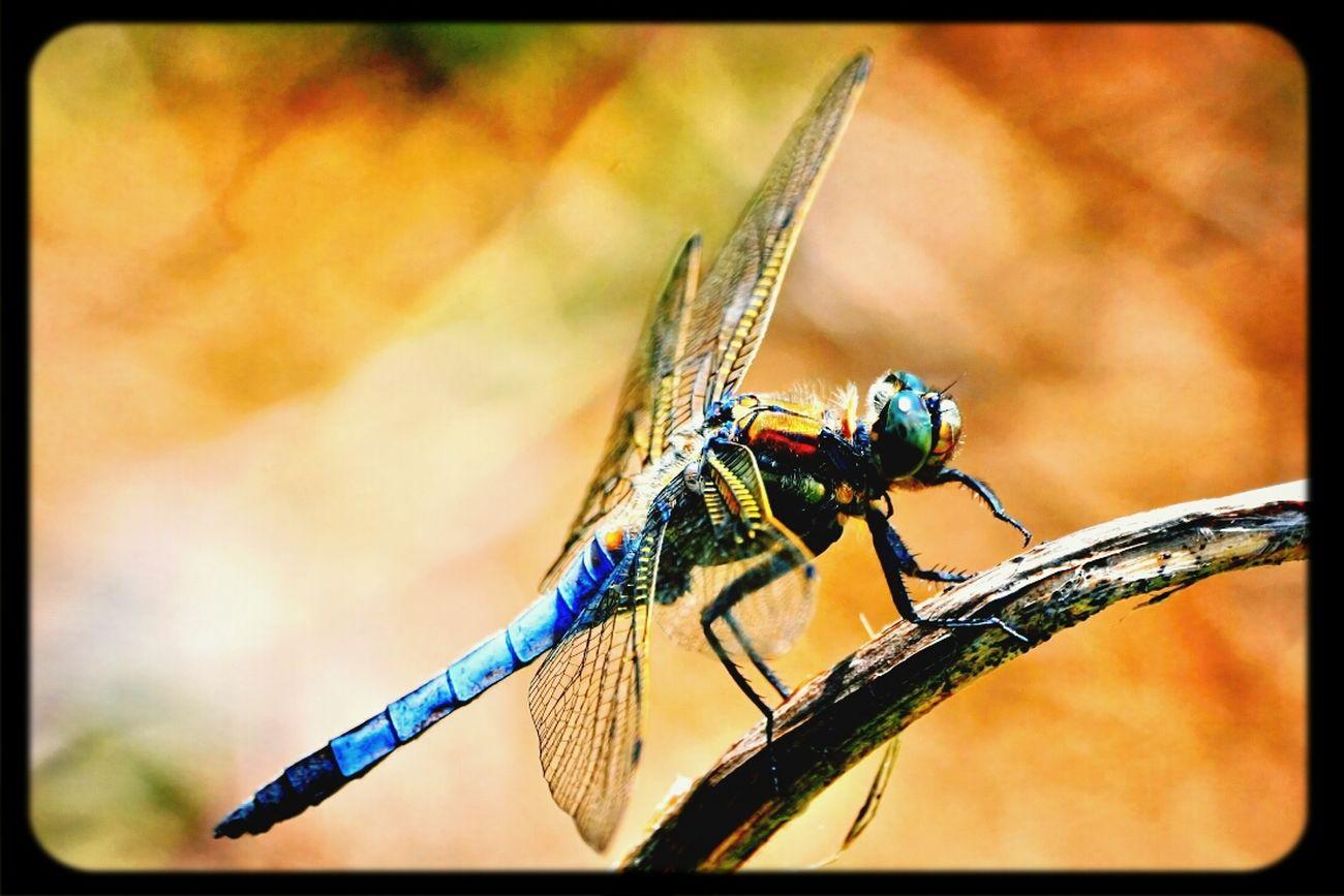 Entomology makro