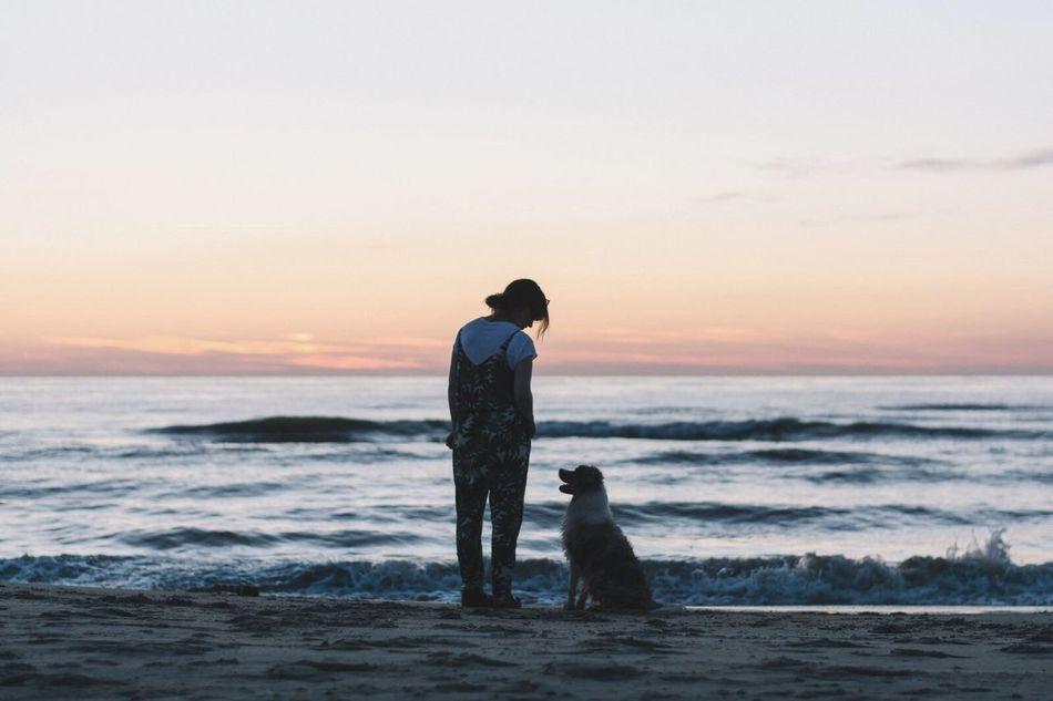 Beautiful stock photos of hunde, sea, beach, togetherness, horizon over water