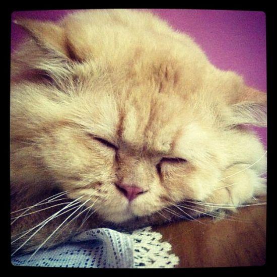 Cat Gerry