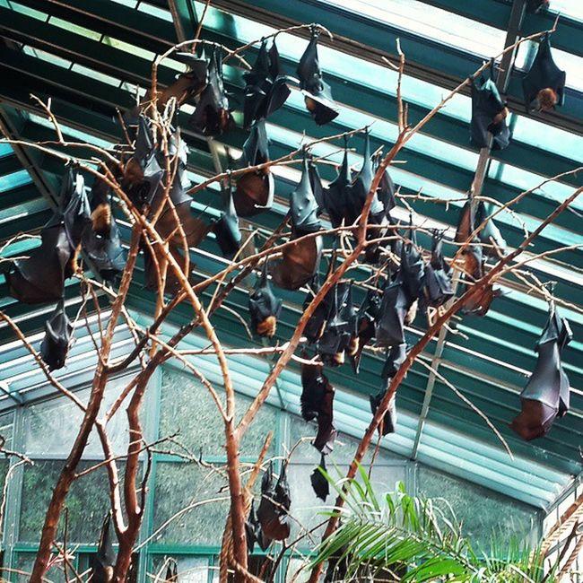 Temaiken Bats Murcielago Love