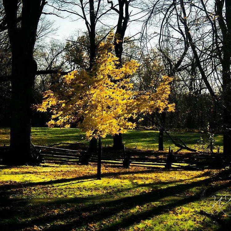 Golden Tree Tcwphotography.com