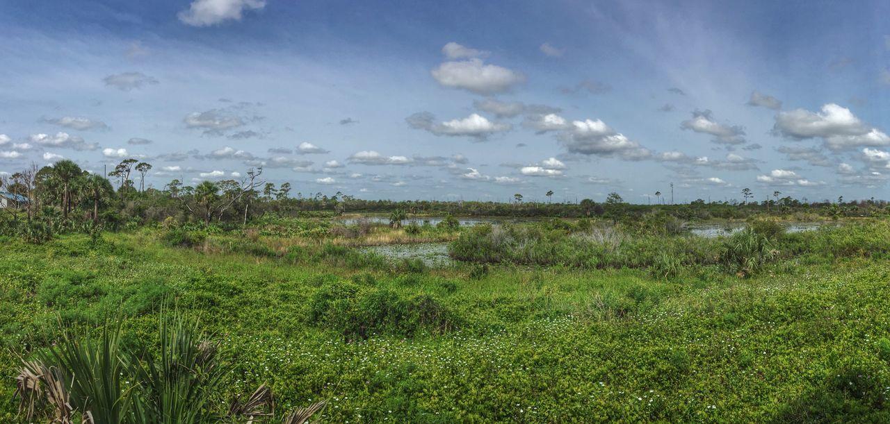 Florida wetlands Jonathan Dickinson State Park Florida Park Wetlands Wetland Landscape