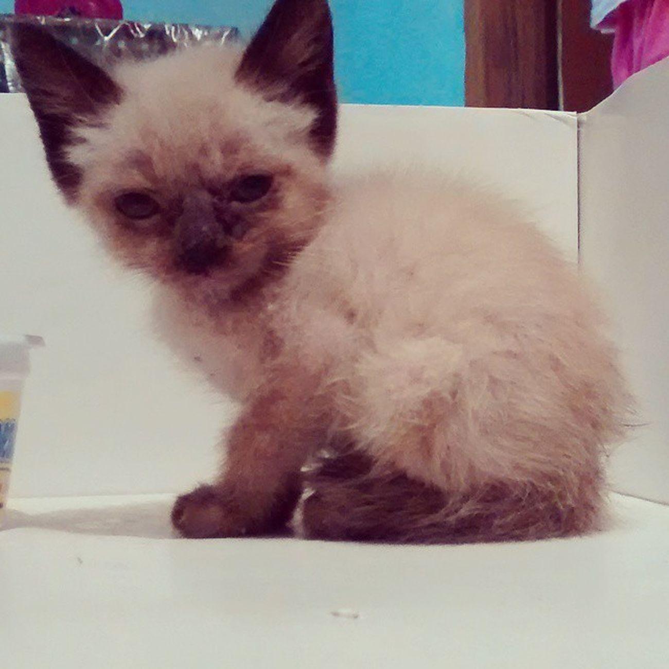 Genteeeeee. Achei um gatinho na rua ... E trouxe pra casa. É tao fofinhoooooooooo . AimeuCORE (minha mae disse que vai jogar no lixo) Choranu