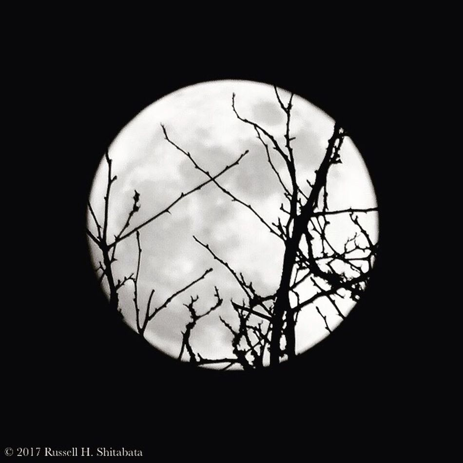 Aloof moon, roof moon, not quite a wolf moon. Nightphotography Moon Full Moon Fullmoon Wolfmoon Moonlight Silhouette Monochrome _ Collection Monochrome_life Monochromatic Monochrome Photography Monochrome Black And White Photography Black And White Bnwphotography Black And White Collection  Blackandwhite Photography Blackandwhitephotography Black & White Bnw Bnw_collection Bnw_captures Black&white Blackandwhite Wolf Moon