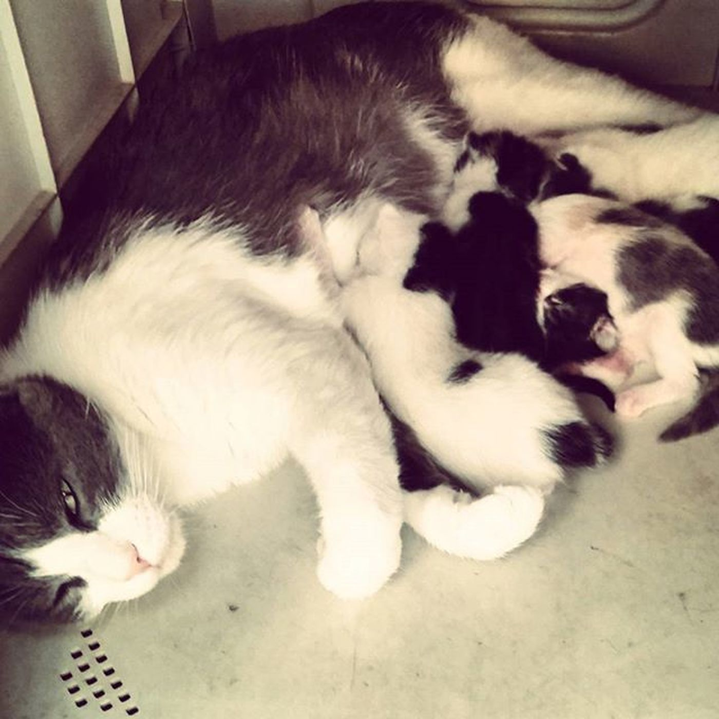 WithMama Cindy Cat Fiveguys