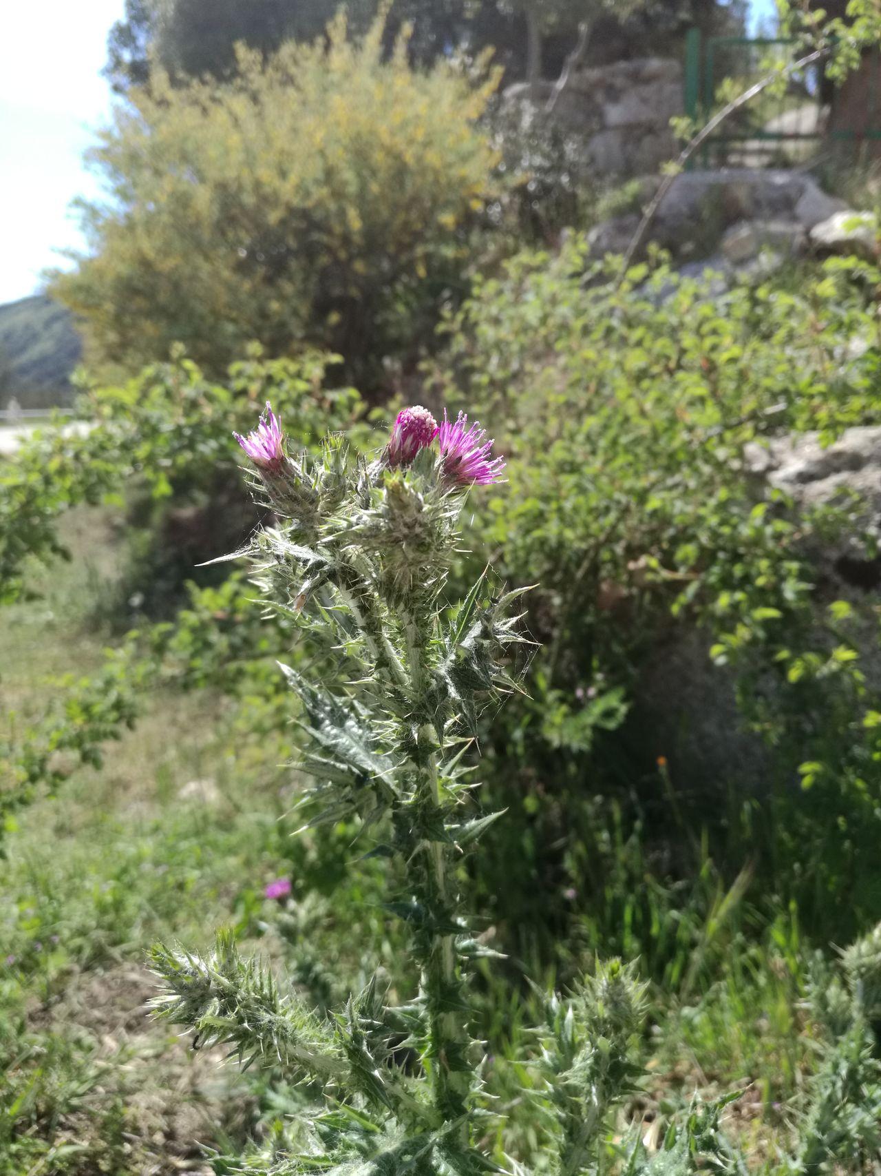 Nature Flower Colors Flowers Flowery Sardinia Sardegna Italy