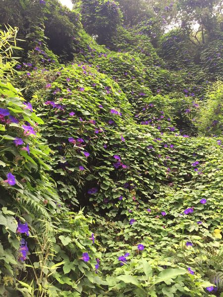 Leaf Nature Growth Purple Beauty In Nature Flower Outdoors