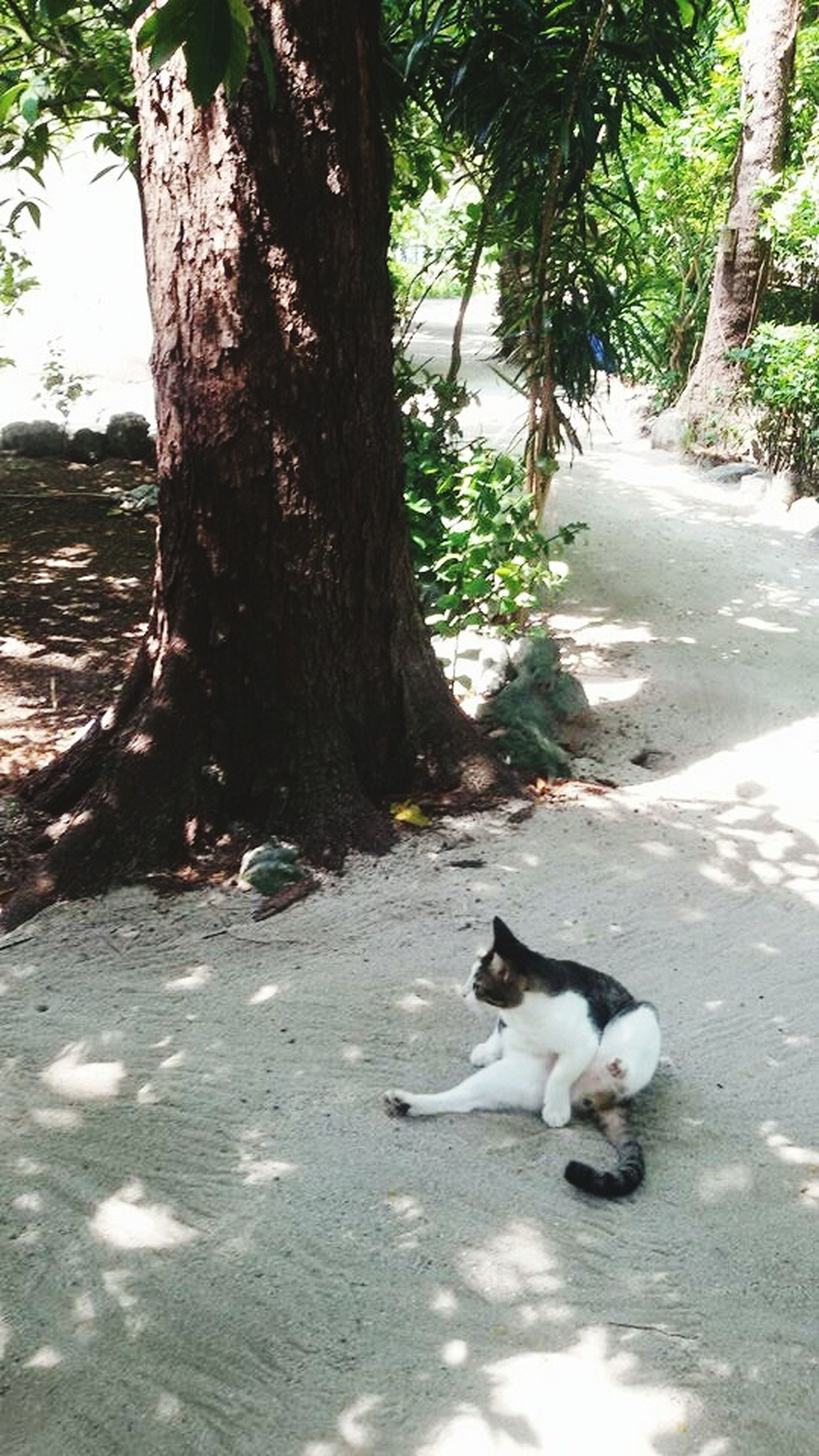 pets, animal themes, mammal, one animal, domestic animals, tree, dog, tree trunk, domestic cat, cat, feline, sunlight, leaf, street, day, outdoors, nature, shadow, relaxation, stray animal
