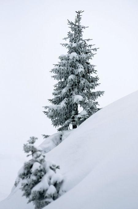 Snowy fir tree on the mountain