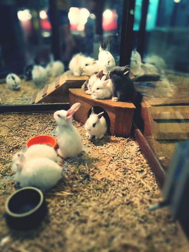 Animal Themes Rabbit ❤️ Rabbitworld Selective Focus First Eyeem Photo Pets Adorable Pets