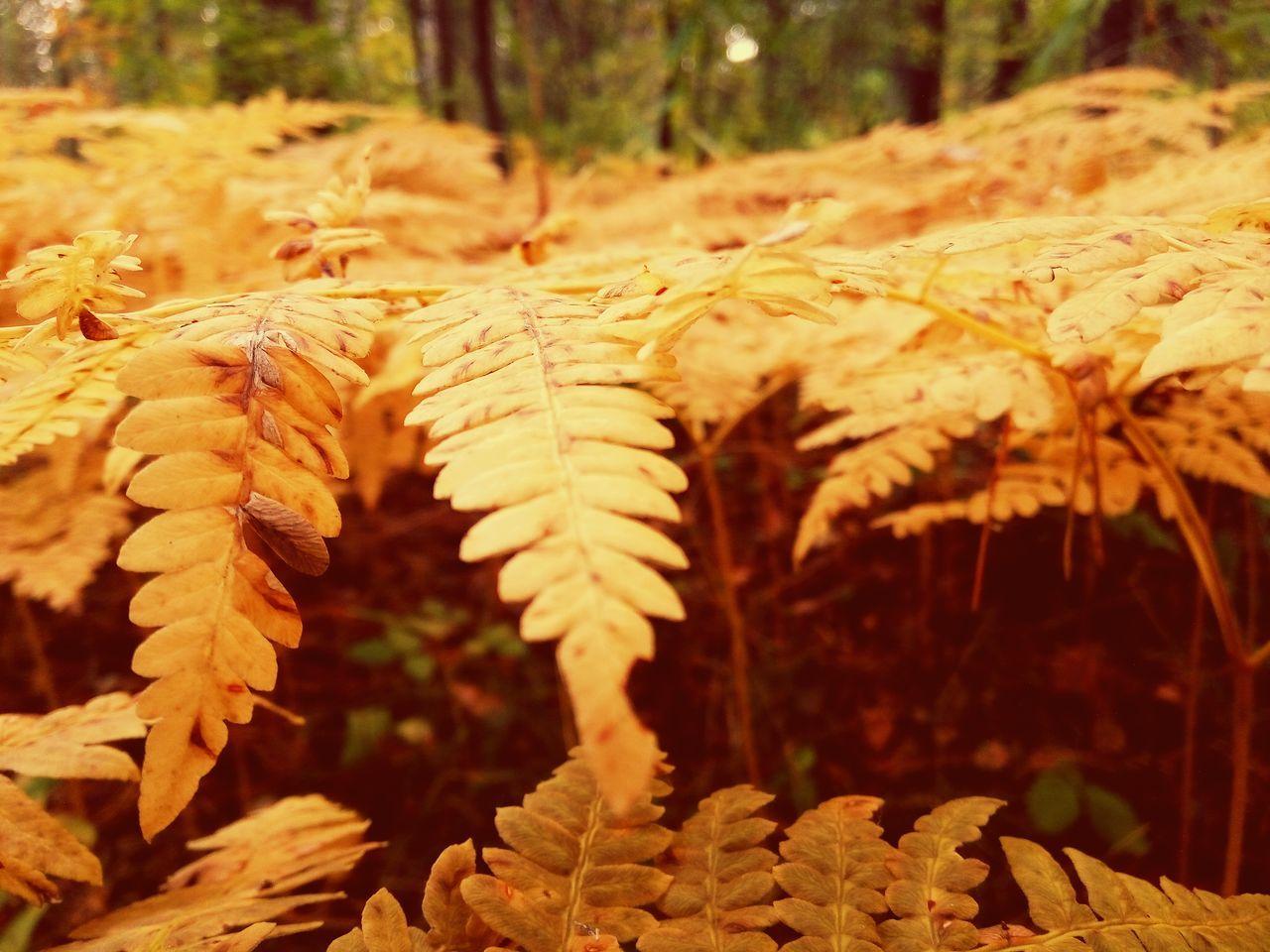 Nature Day папоротник Осень 🍁🍂 осень прекрасна 🌾🍂🍃 золото Gold Colored Goodday
